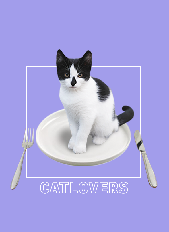 warum essen wir nicht einfach unsere katze?